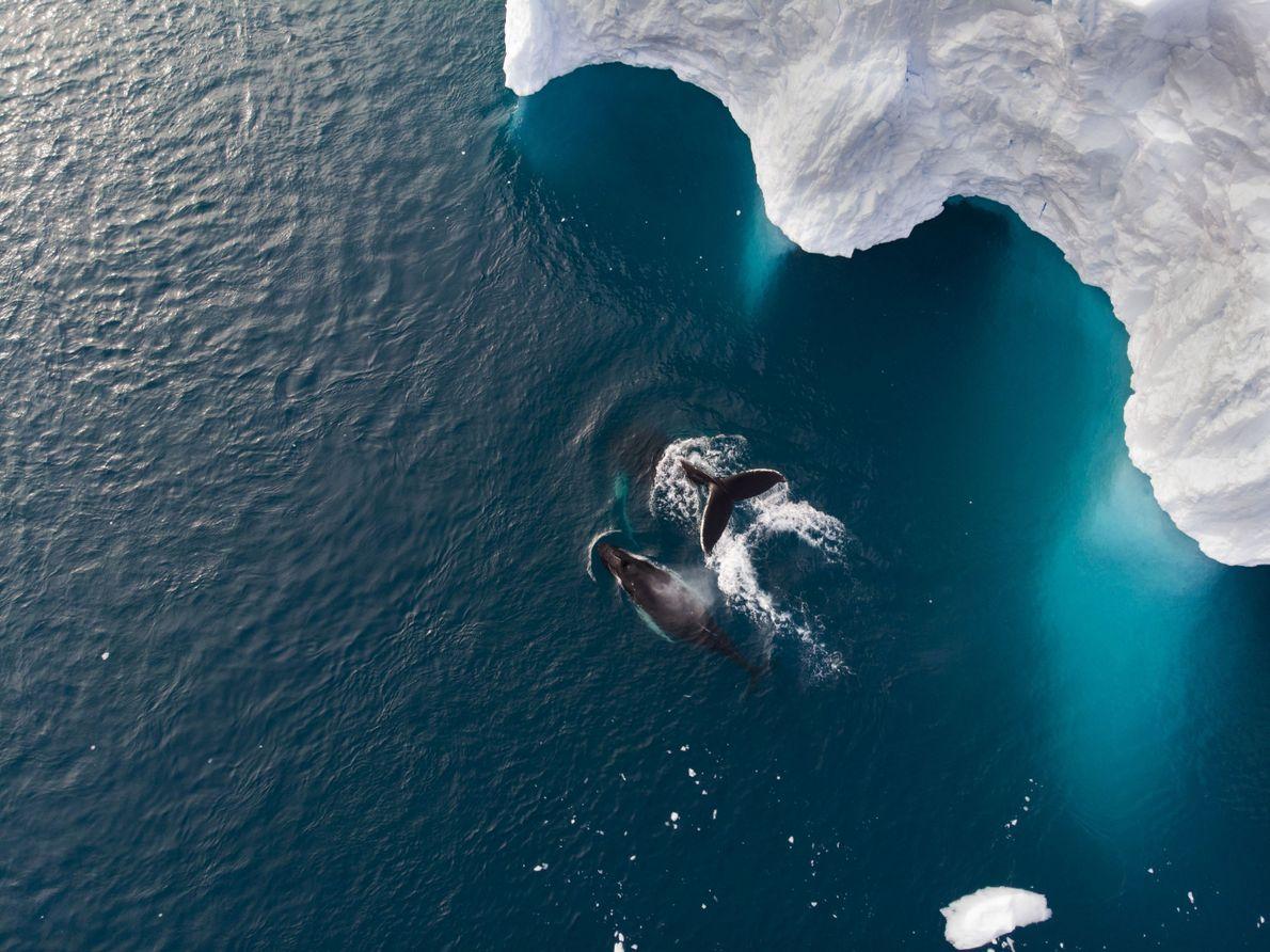 Nadar Juntas