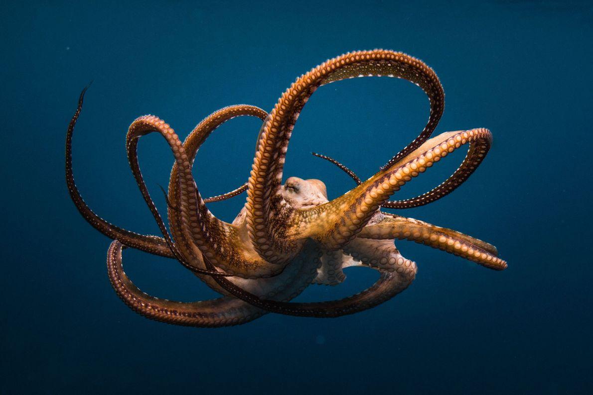 Drama subaquático