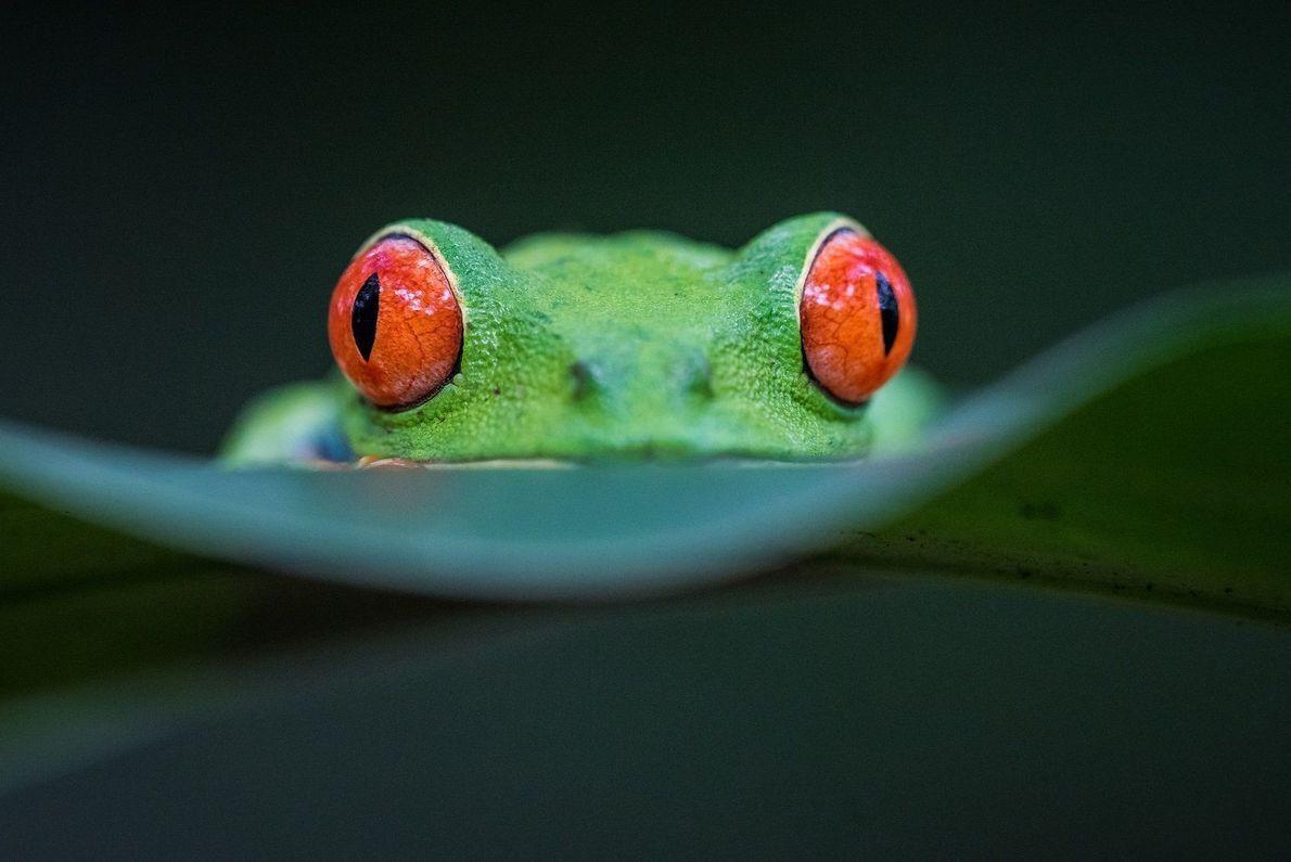Efeito Olhos Vermelhos