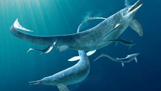 Fóssil Impressionante Revela Predador Marinho de 4 Metros Dentro do Estômago de Outro