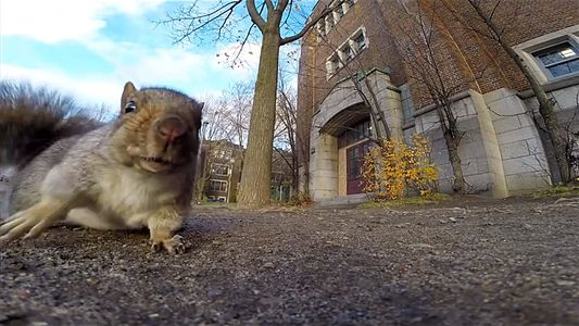 Esquilos à Solta: Descubra os Porquês do seu Comportamento Peculiar