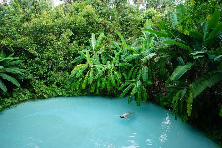 No Parque Estadual do Jalapão, os fervedouros são fontes cársicas únicas que fornecem um oásis fresco ...