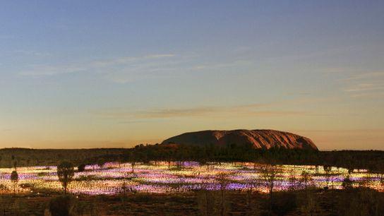 """A instalação """"Campo de Luz de Uluru"""" transporta os visitantes através de um jardim cintilante."""