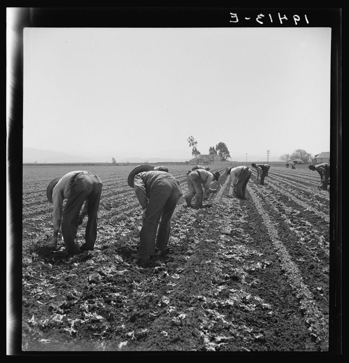 MOTINS DE WATSONVILLE, 1930