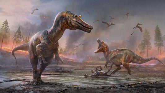 Feroz dinossauro 'garça do inferno' coloca novas marcas na história de origem do Espinossauro