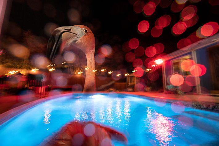 Bob, um flamingo, dá um mergulho noturno na piscina de água salgada da casa de Odette ...