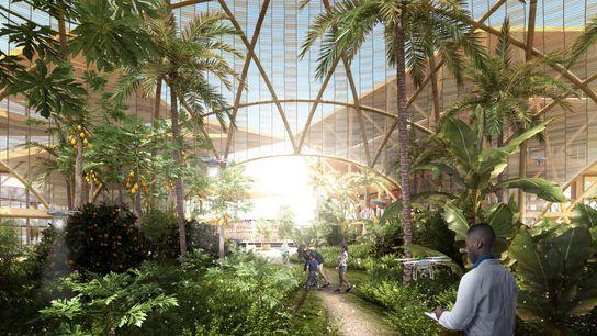Neste conceito, os habitantes cultivariam a sua própria comida em quintas.