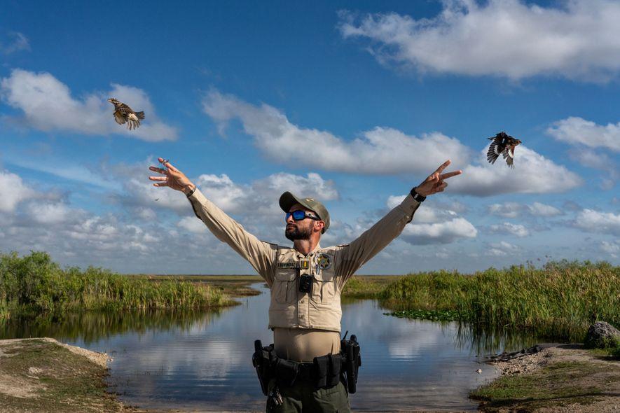Todos os anos são capturadas milhares de aves canoras migratórias na Flórida para abastecer o comércio ...
