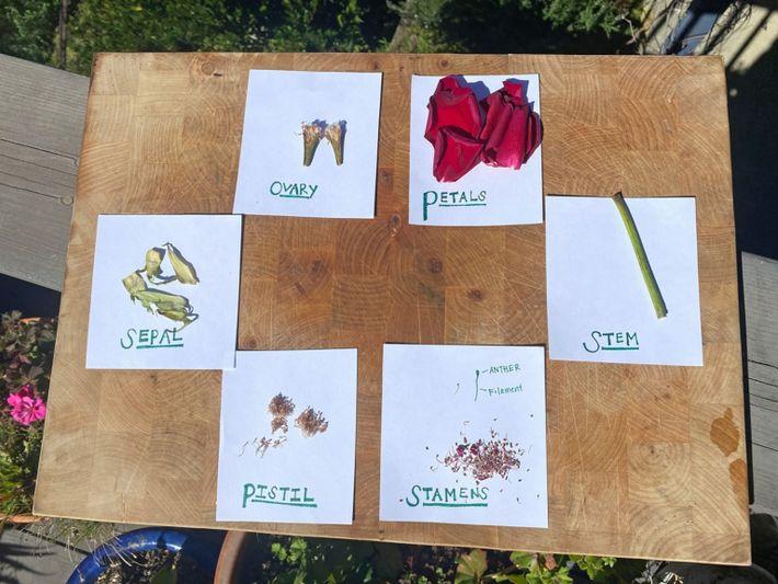 Flores - Experiências científicas de Primavera