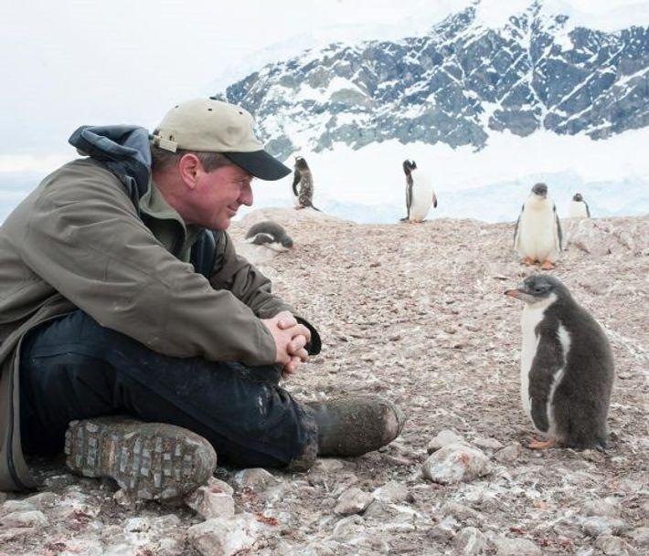 Imagem de Joel Sartore com pinguins