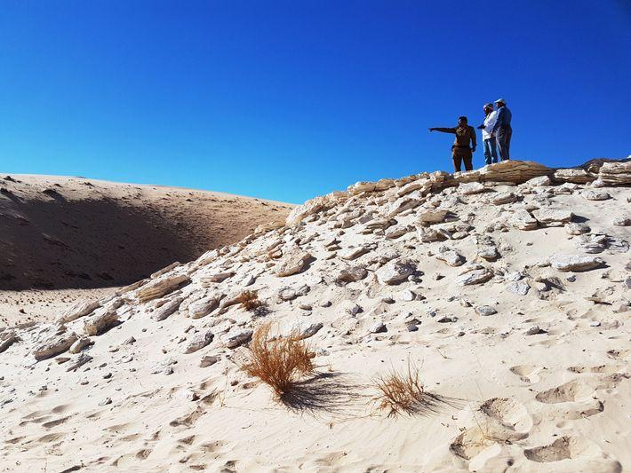 As pegadas fósseis foram encontradas no antigo depósito do lago Alathar, na Arábia Saudita.