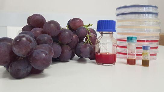 Laboratório do grupo MicroART procura alternativas naturais ao combate a bactérias multirresistentes).
