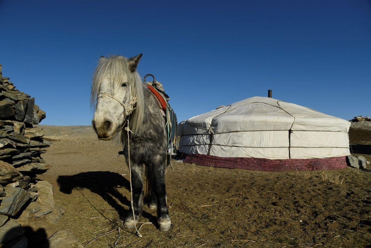Ger (ou Yurt) na região de Tsambagarav, e um cavalo, o único meio de transporte.