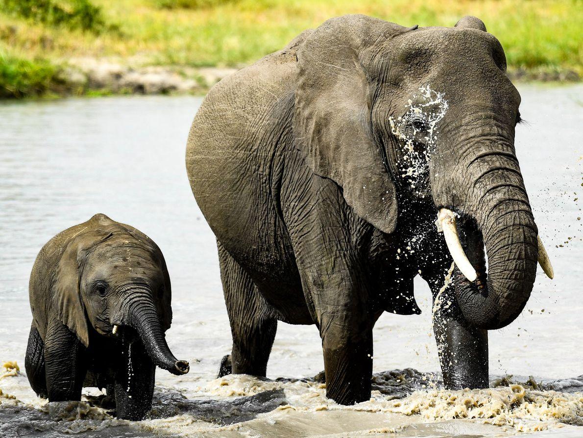 Mãe e cria elefantes