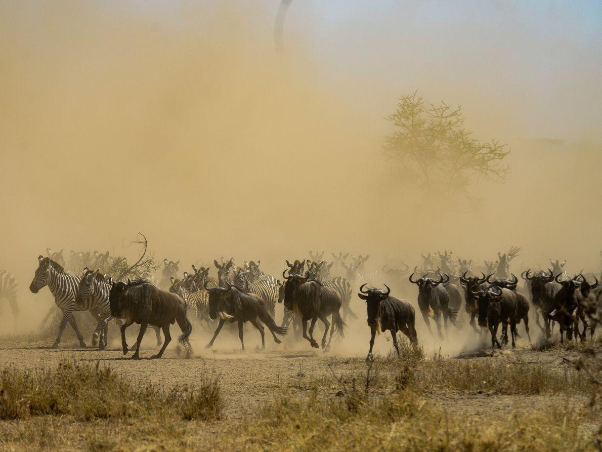 migração animal