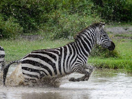 15 Fotografias de Animais Selvagens no seu Fulgor