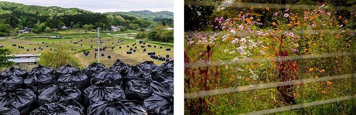 Sacos com resíduos e flores