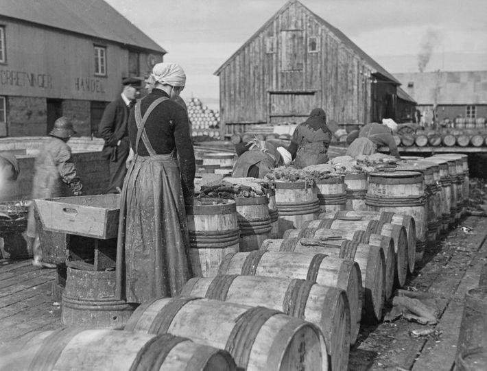 Em 1935, as mulheres enchiam barris com arenque, sal e folhas de louro na vila piscatória ...