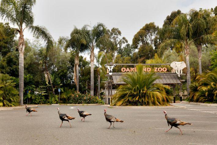 Zoo de Oakland