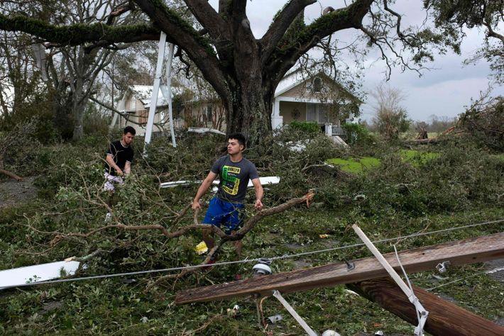 Pessoas limpam os detritos de uma árvore