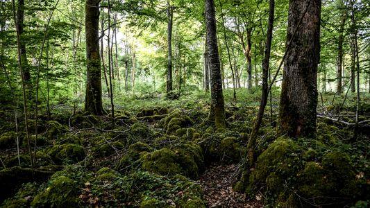 No Parque Nacional Mais Recente de França, as Árvores São o Grande Destaque
