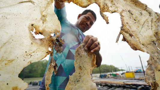 Esta Raia Gigante Pode Ser o Maior Peixe de Água Doce