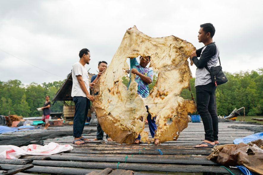 Habitantes de Bungin, uma vila piscatória em Sumatra do Sul, seguram na pele seca de uma ...