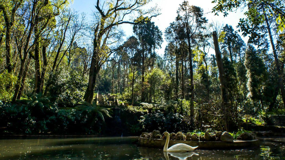 A Mata Nacional do Bussaco, que constitui o epicentro desta rota, tem uma enorme diversidade florística ...