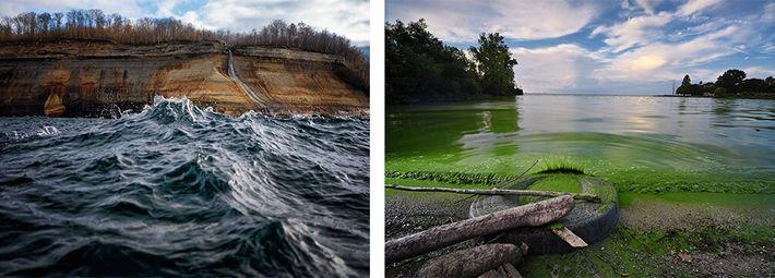 Esquerda: O plâncton no Lago Superior está a ser vítima da pulga-de-água espinhosa, que por sua ...