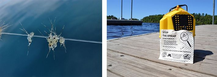 Pulgas-de-água aglomeradas numa linha de pesca e panos da loiça impressos com dicas para reduzir a ...
