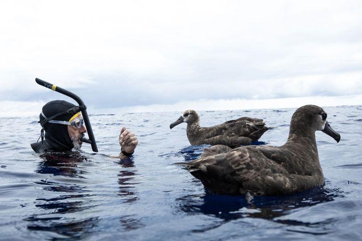 Lecomte com dois albatrozes na Grande Ilha de Lixo do Pacífico. O desperdício de plástico em ...