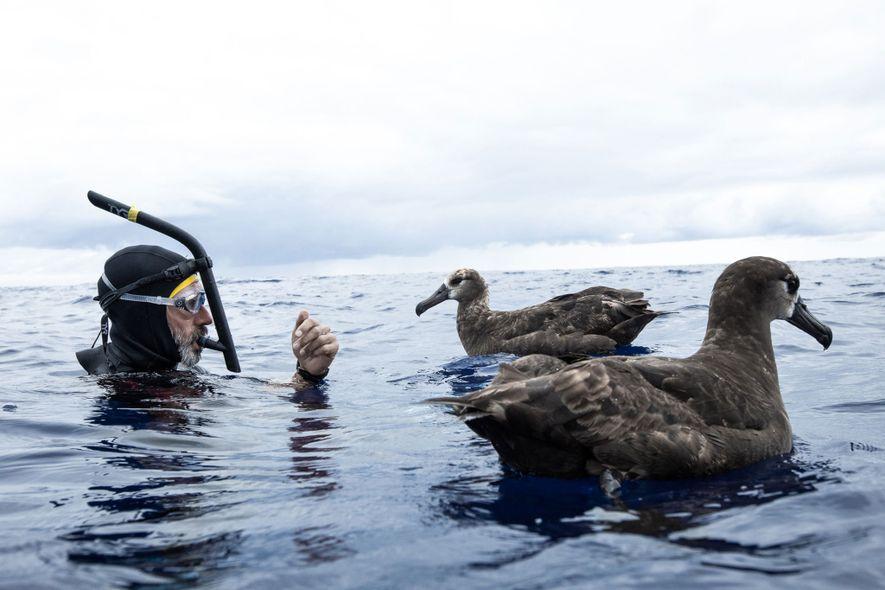 Lecomte com dois albatrozes na Grande Ilha de Lixo do Pacífico. O desperdício de plástico em grande escala está a alterar o ecossistema marinho de várias formas, incluindo a movimentação de microplásticos e produtos químicos de plástico pela cadeia alimentar – após serem ingeridos pela vida marinha.