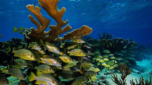 As Jóias Submarinas de Cuba Estão no Percurso do Turismo