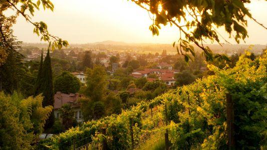 Esta região pouco conhecida pode ter os melhores vinhos de Itália
