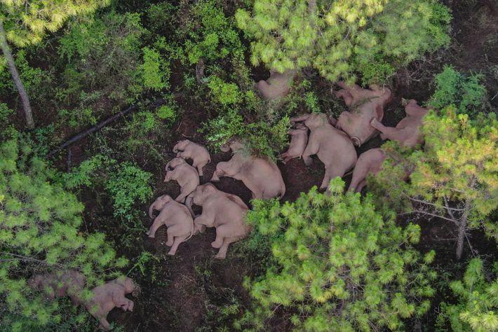 01-elefantes-manada da china