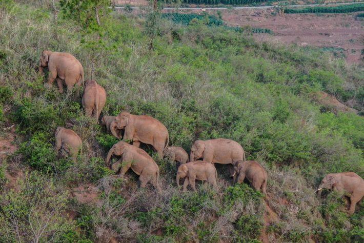 02-elefantes-manada da china