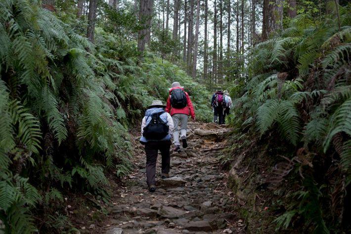 Rota de peregrinação Kumano Kodo