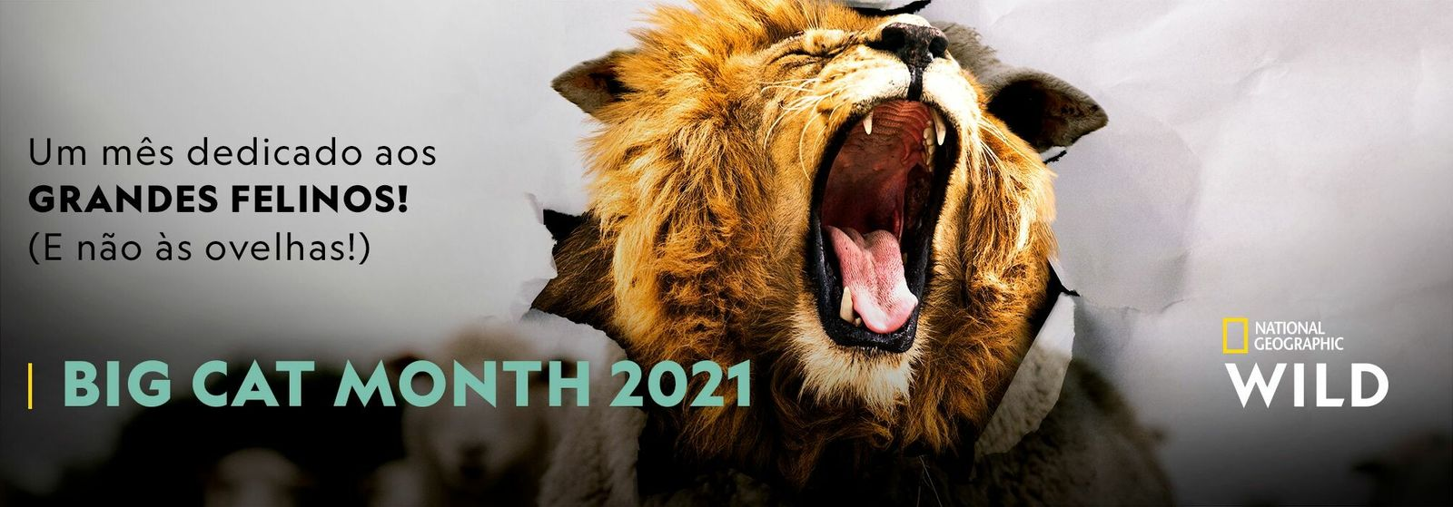 Big Cat Week 2021