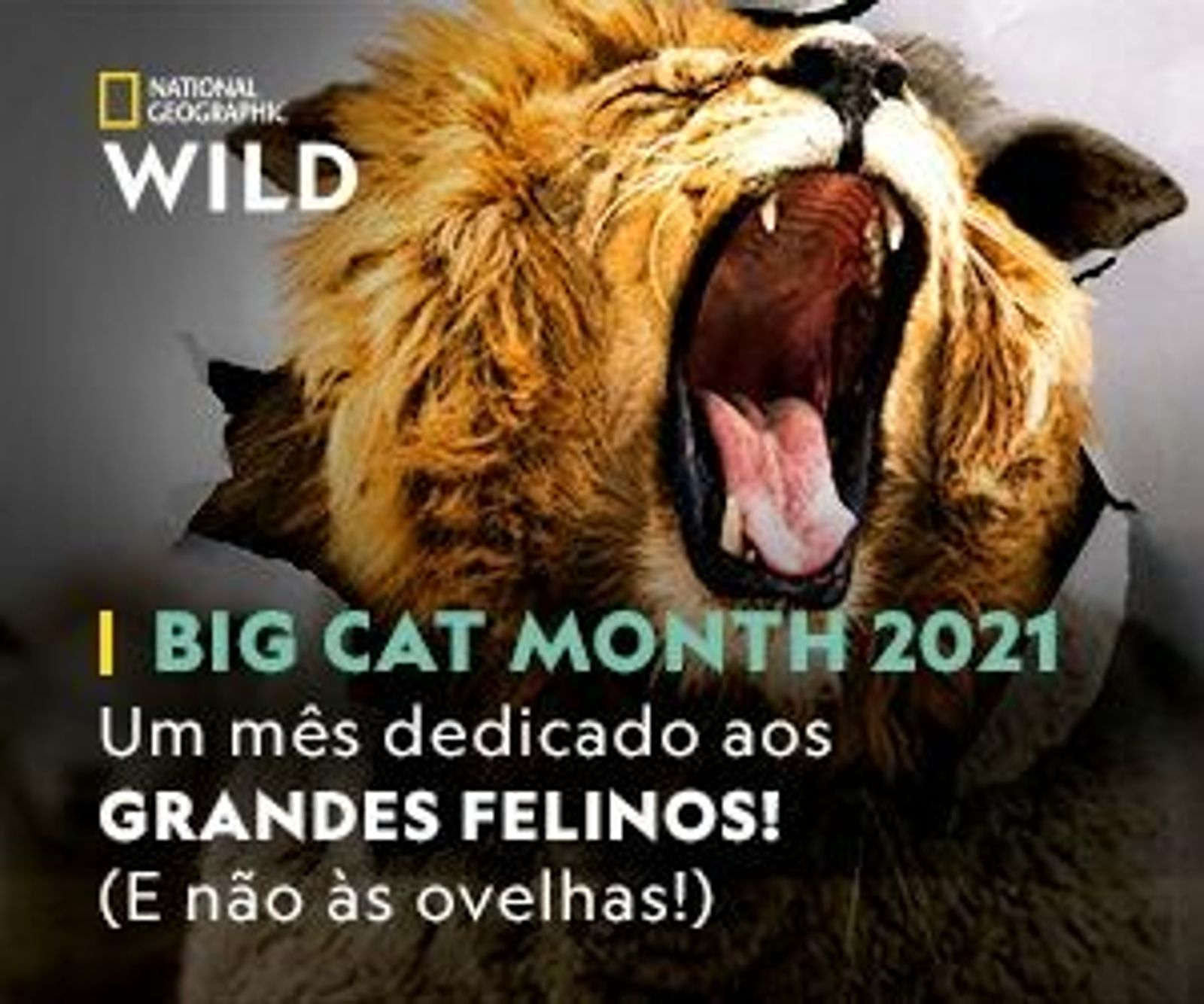 Big Cat Month 2021