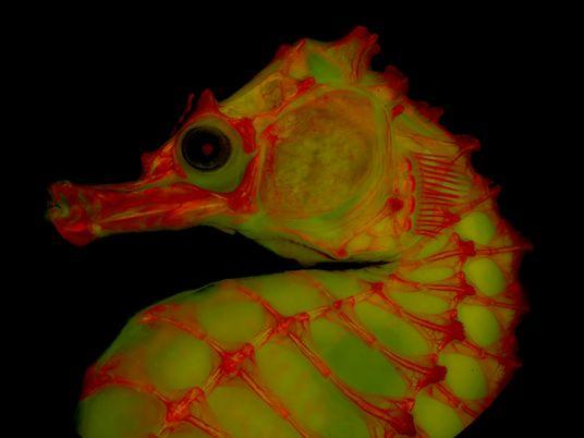 A fotografia de esqueletos está a ganhar uma nova vida com a ajuda de gelatina