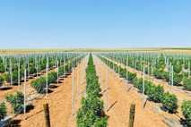 A plantação de canábis para fins medicinais situa-se na aldeia de Montes Velhos.