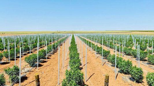 Maior Plantação Europeia de Canábis Medicinal Fica no Alentejo
