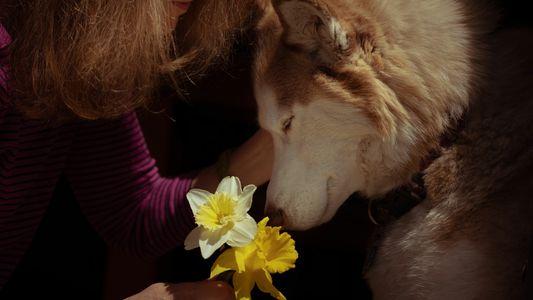 Os animais de estimação estão a ajudar-nos a lidar com a pandemia – mas podem ser ...