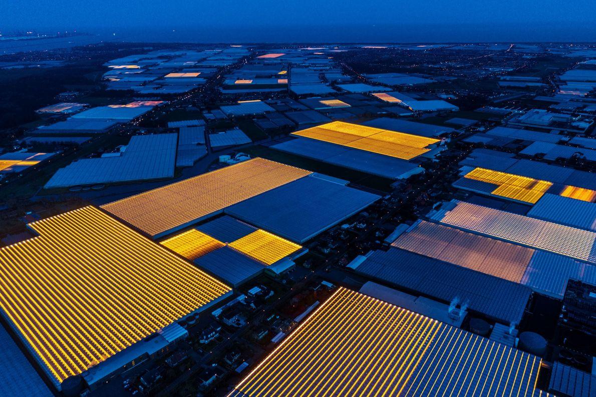 Estrias de luz artificial dão uma aura sobrenatural a Westland, a capital das estufas da Holanda. ...