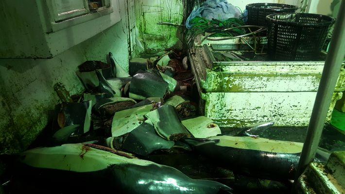 Carcaças de golfinhos espalhadas no convés de um navio monitorizado pela Fundação de Justiça Ambiental. Os ...