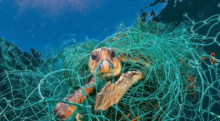 Uma rede de pesca prende uma tartaruga no mediterrâneo.
