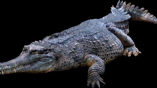Lições do Crocodilo de Tentúgal