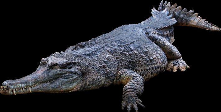 Descoberto o crocodilo mais antigo do mundo, em Tentúgal.