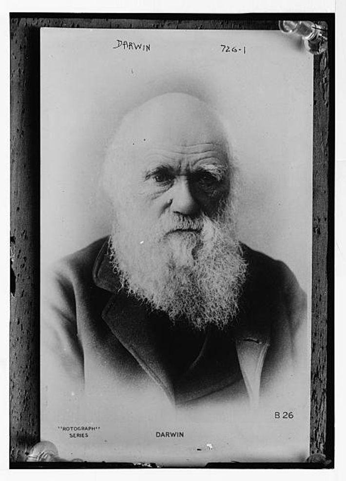 Charles Darwin, 1879