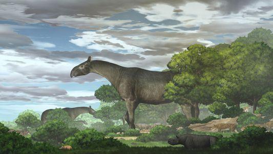 Fósseis de rinoceronte mais alto do que uma girafa encontrados na China